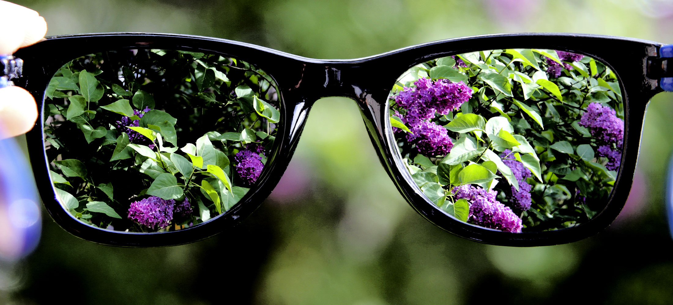 large-image-of-eye-glasses-and-purple-flowers